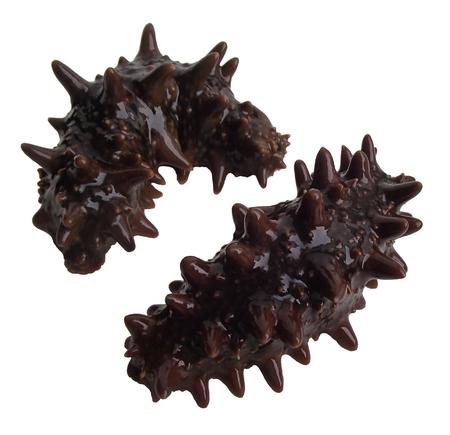 Sea cucumber trepang Stichopus japonicus isolated on white background