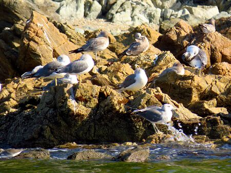 Group of gulls in the rocks of sea beach