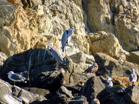 Group of birds: herons, cormorant, gulls in the rocks of sea beach 写真素材