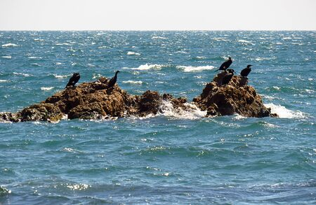 Cormorants and gulls sitting on the rock in storming sea 写真素材 - 131975431
