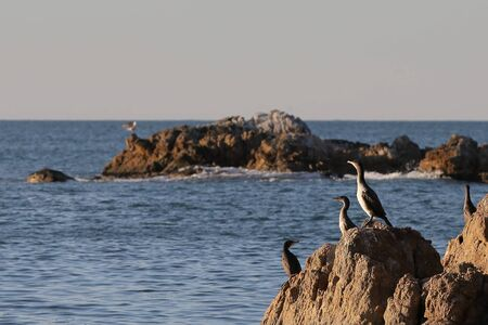 Cormorants sitting on the rocks on blurred background of rocks on horizon. Seabirds in nature. Sunny sunrise light, calm blue sea.