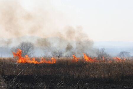 Wildfire in autumn meadow. Wild fire flame burning grass and trees in field. Natural disaster for wildlife.