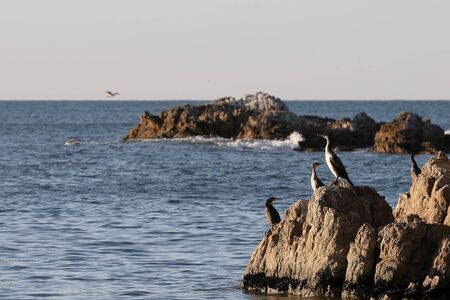 Cormorants sitting on the rocks on blurred background of rocky island on horizon. Seabirds in nature. Sunny sunrise light, calm blue sea.