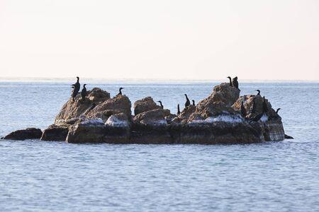 Cormorants sitting on the rocky island in sea. Seabirds in nature. Sunny sunrise light, calm blue sea, cold autumn weather.