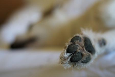 Puppy paw Stock fotó