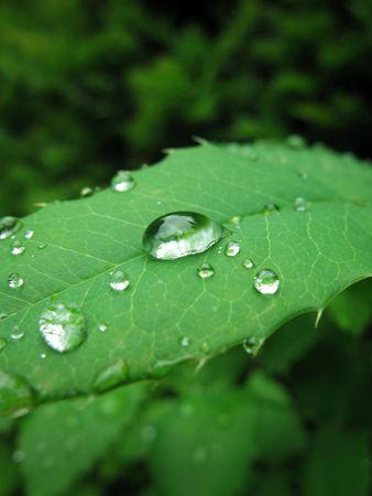 knospe: blatt mit Wassertropfen
