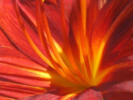 knospe: Feuer Blume