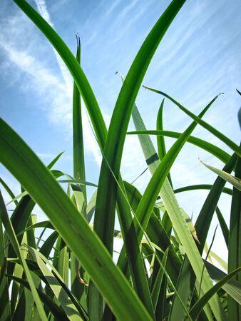 Pflanzen: Langes Gras