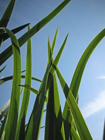 feld: Langes Gras