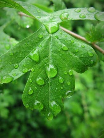 knospe: plants