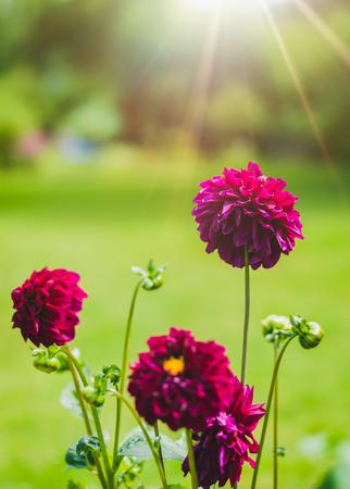 violet flower Standard-Bild