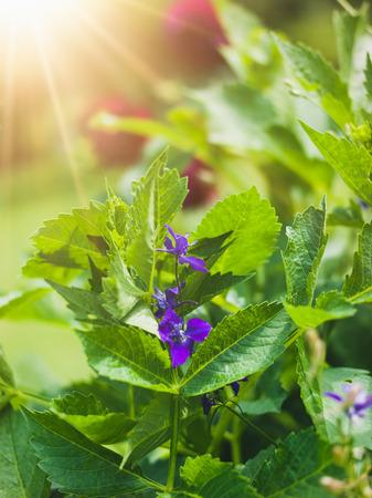 purple flower Lizenzfreie Bilder