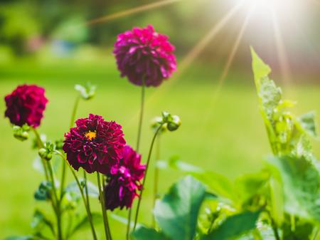 violet flower Lizenzfreie Bilder