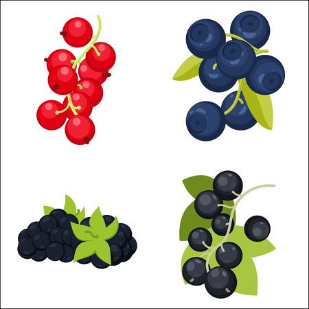 black currants: Red and black currants, blueberry, blackberry set Illustration