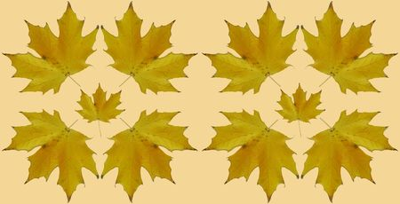 rotational: symmetrical maple leaves Stock Photo