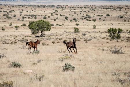 Wild Horses, Navajo, Death Valley, USA Stock fotó