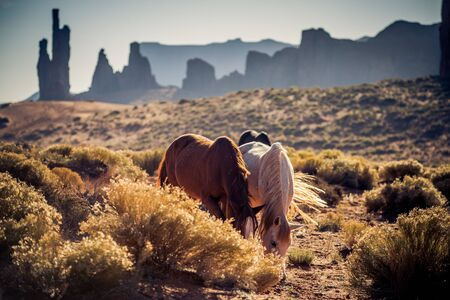Horses, Monument Valley, USA