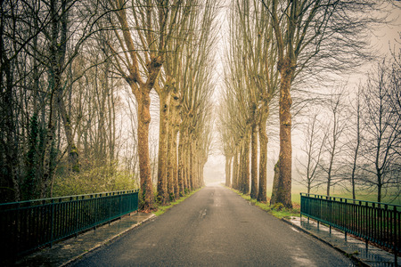 trees line the road in france