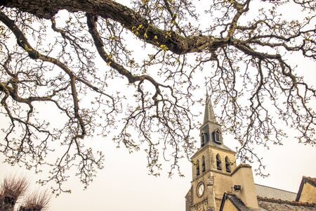 a tree with a church steeple in france