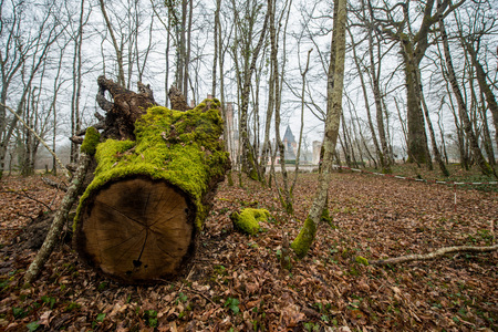 moss grows on the stump of a tree in france Stok Fotoğraf