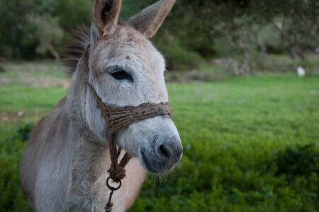 a closeup of a donkey