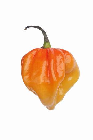 capsicum plant: Habanero hot pepper (Capsicum chinense Habanero). Image of single orange pepper on white background