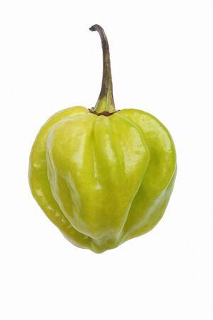 capsicum plant: Habanero hot pepper (Capsicum chinense Habanero). Image of single green pepper isolated  on white background
