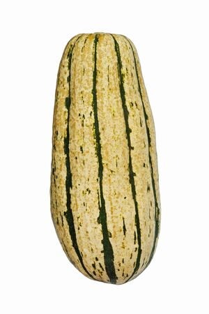 cucurbita: Delicata squash (Cucurbita pepo Delicata). Called Peanut squash, Bohemian squash and Sweet potato squash also. Image of single squash on white background