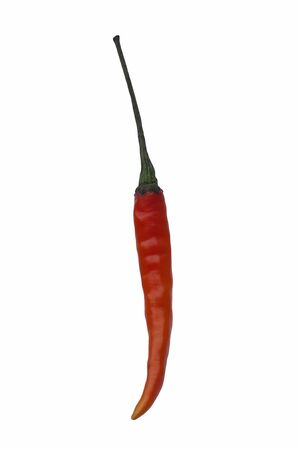 thai chili pepper: Thai hot pepper (Capsicum annuum Thai hot pepper). Called Bird eye chili, Birds chili, Thai chili, Thai dragon and Boonie pepper also. Image of single pepper isolated on white background