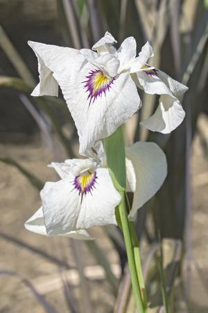 유키 야나기 수위 홍채 (홍채 x 의사 유키 야나기)