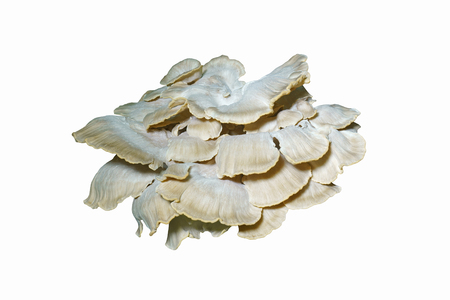Giant polypore (Meripilus sumstinei). Called Black staining polypore also. Synonym: Grifolia sumstinei. Image of fungus isulated on white background Stock Photo