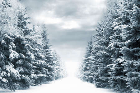 winter road: cold and snowy winter road with blue evergreens and grey clouded skies Stock Photo