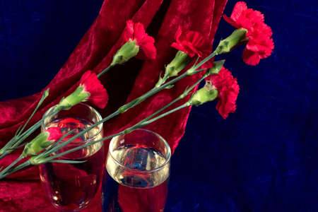 velure: two glasses of champagne and carnations on the blue velvet Stock Photo