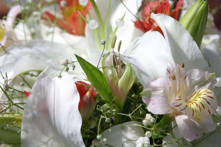 caulis: bunch of white and red lilies. Closeup