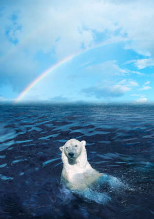 polar bear in the dark cold water, rainbow is on the backgrownd Stock Photo - 1613874