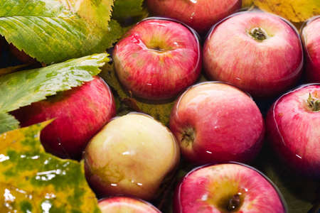 glut: colorful image of fresh autumn red apples in water