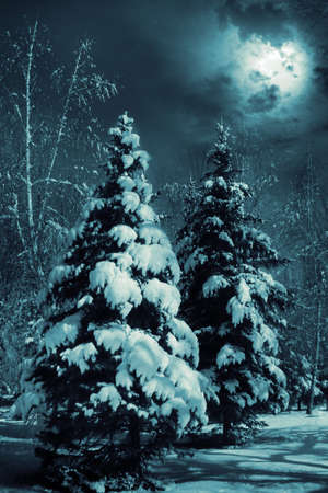 Evergreens at snowy winter forest in the night.  Special toned photo fx.