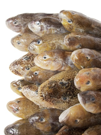 shop for animals: Fresh fish. Gobies Stock Photo