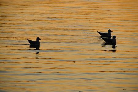Three seagulls at sunset photo