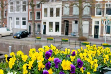 Flowers on the streets of Gorinchem. Netherlands photo