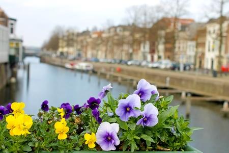 Flowers on the streets of Gorinchem. Netherlands Stock Photo - 14189566