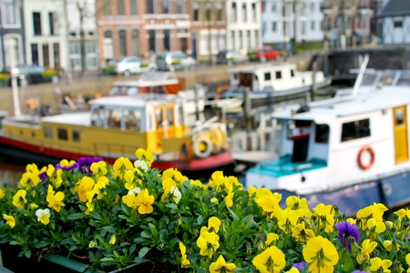 Flowers on the streets of Gorinchem. Netherlands Stock Photo - 14189571
