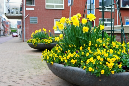 Flowers on the streets of Gorinchem  Netherlands Stock Photo - 17123426