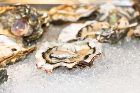 Oysters on ice in the fish restaurant Stock Photo - 17046455