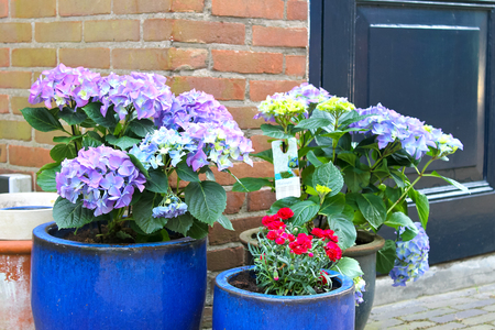 Pots of flowers near the flower shop in Gorinchem,  Netherlands photo