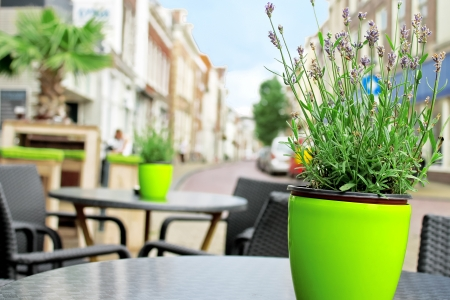 Flowers on the tables of street cafes  Gorinchem  Netherlands  photo