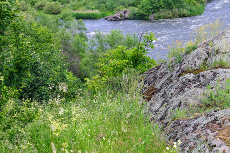 drench: Wild flowers and moss-covered boulders near the river