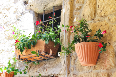 Pot of flowers adorn the walls of the house photo
