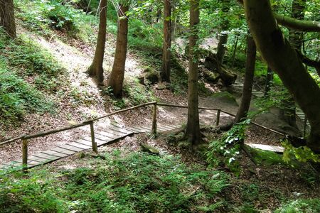 The path in the Carpathian Forest Reserve photo