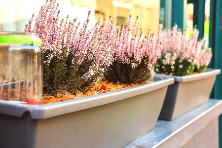 Pot plants on a street in Dutch city photo